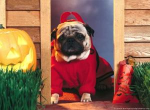 Funny Dog Halloween Wallpapers - Top Free Funny Dog Halloween Backgrounds