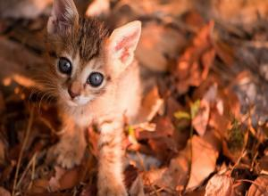 Fall Cat Wallpapers - Top Free Fall Cat Backgrounds