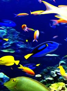 Fish Phone Wallpapers - Top Free Fish Phone Backgrounds