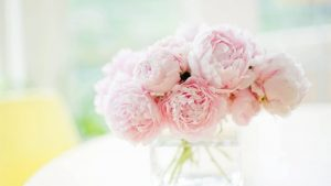 Pink Peonies Desktop Wallpapers – Top Free Pink Peonies Desktop Backgrounds