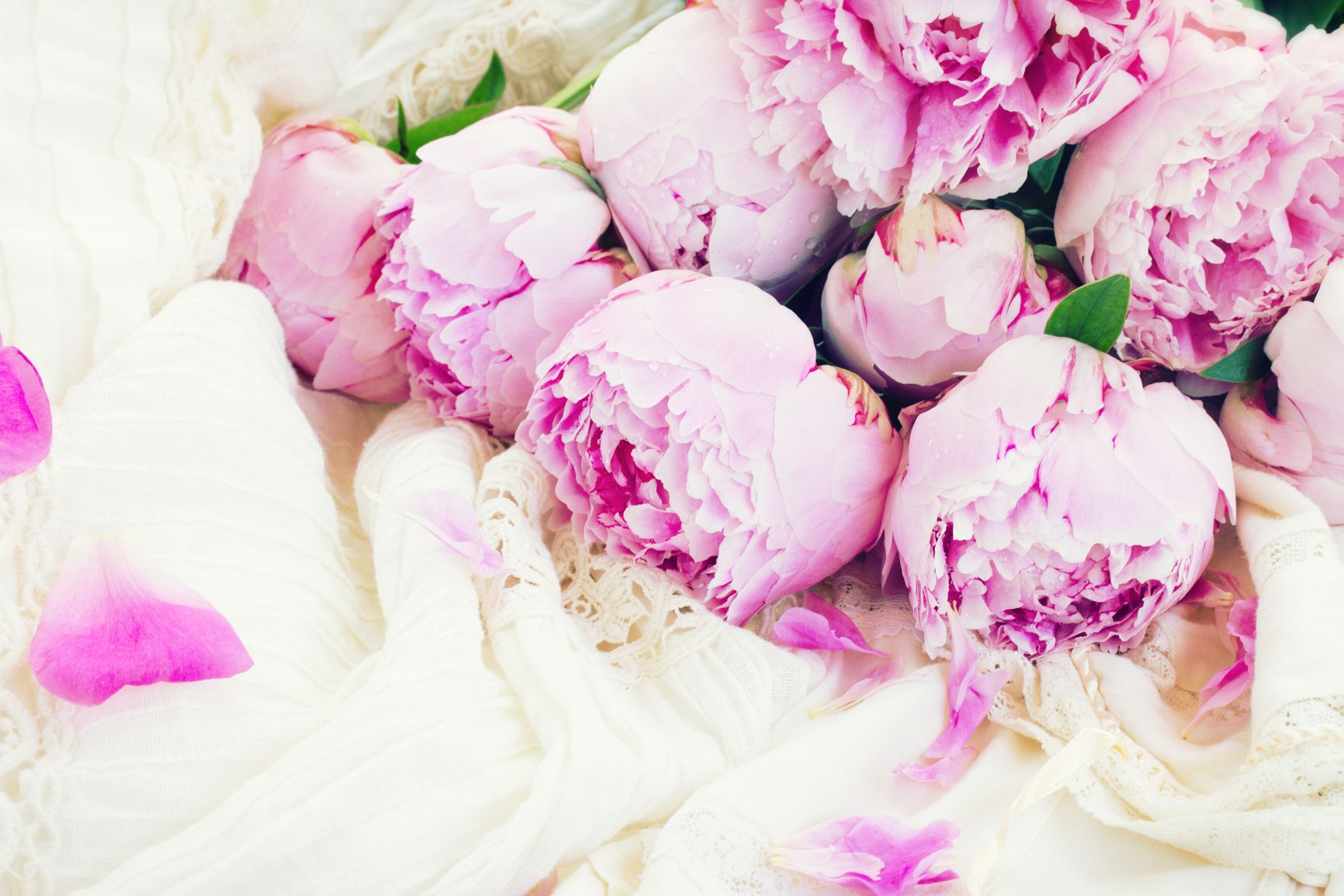 1732x1155 Hite and Pink Peonies HD Wallpaper, Background Images