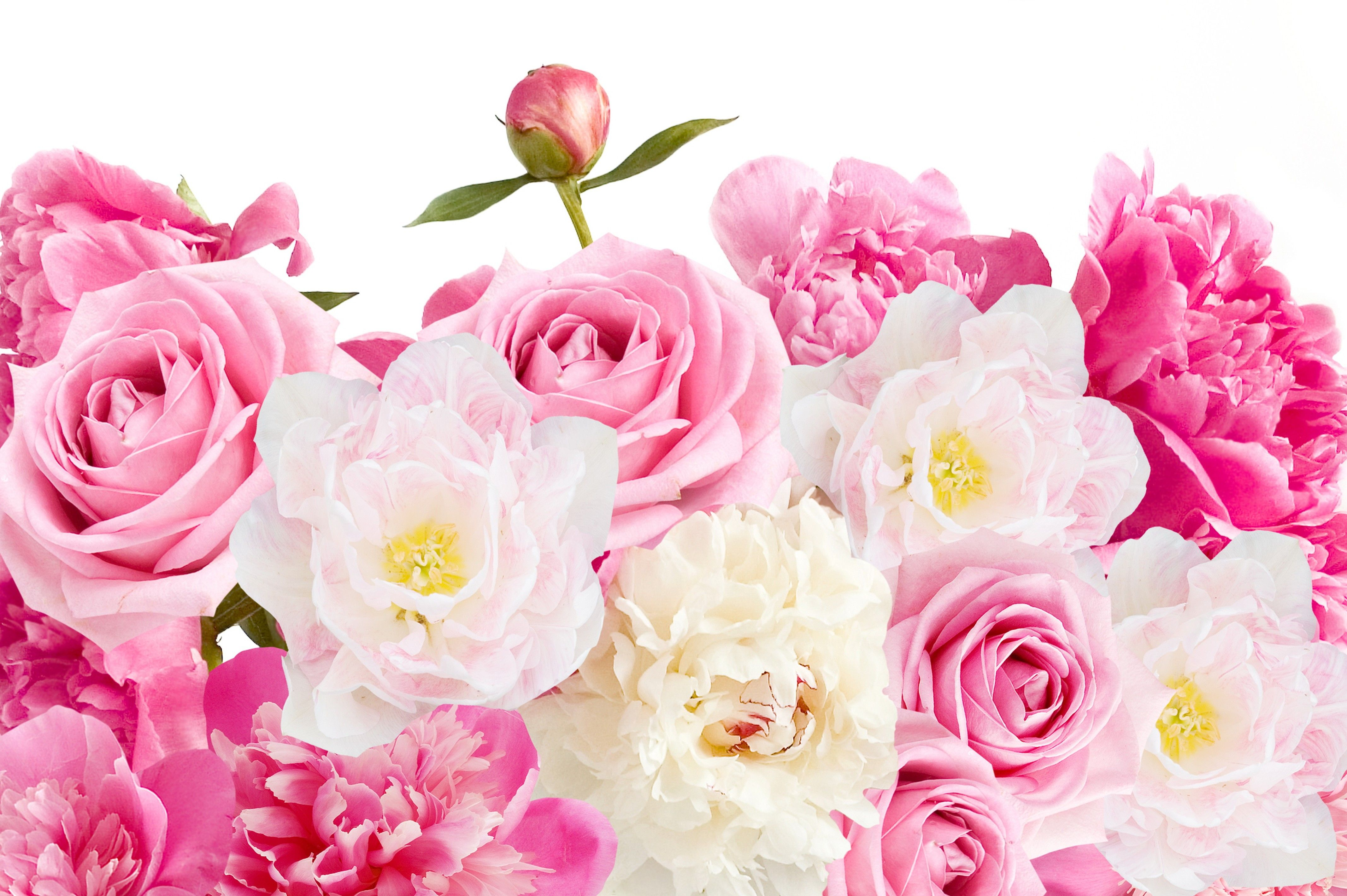 4270x2840 Pink Roses and Peonies 4k Ultra HD Wallpaper | Background Image ...