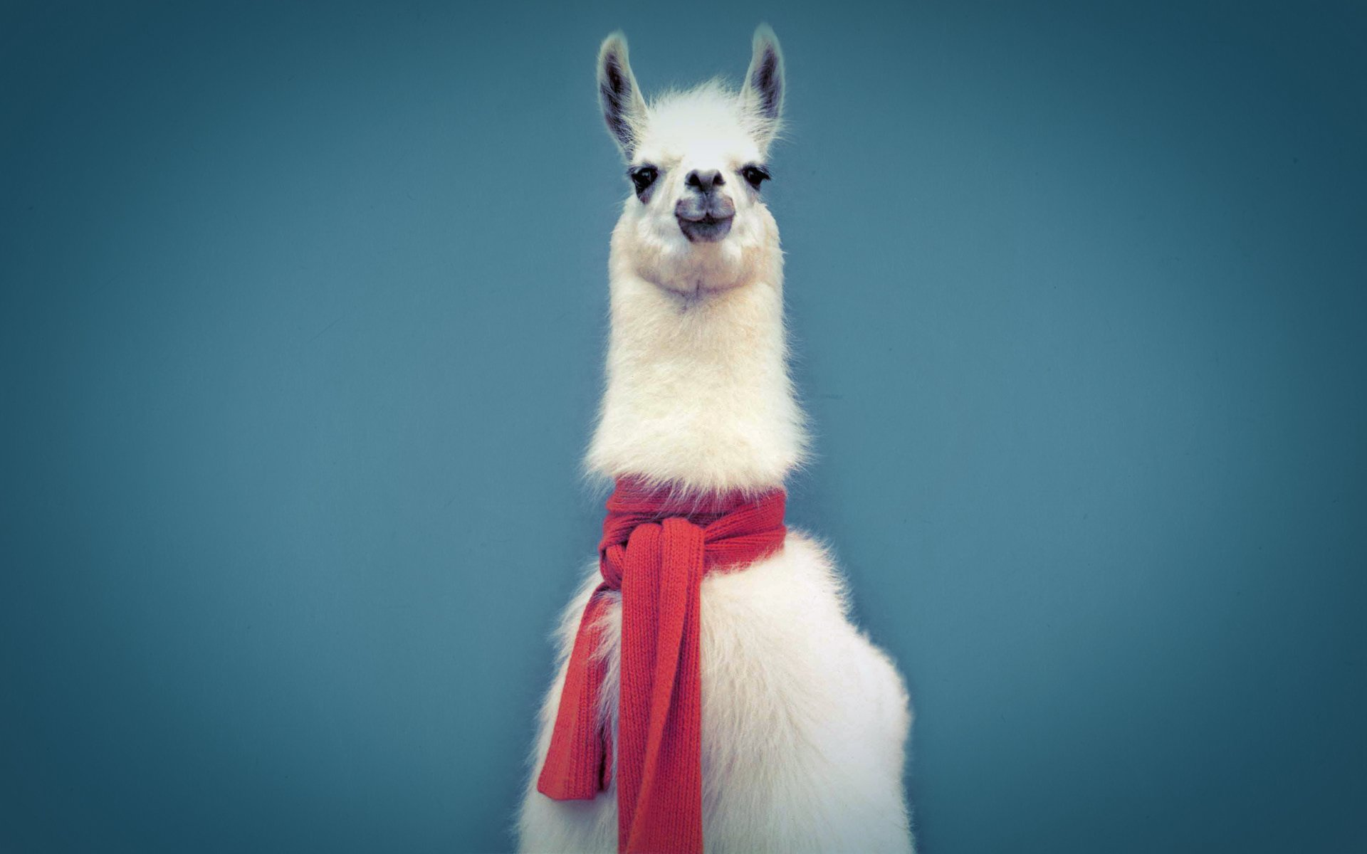 1920x1200 14 Llama HD Wallpapers | Background Images - Wallpaper Abyss