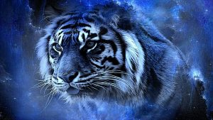 Blue Tiger Wallpapers – Top Free Blue Tiger Backgrounds