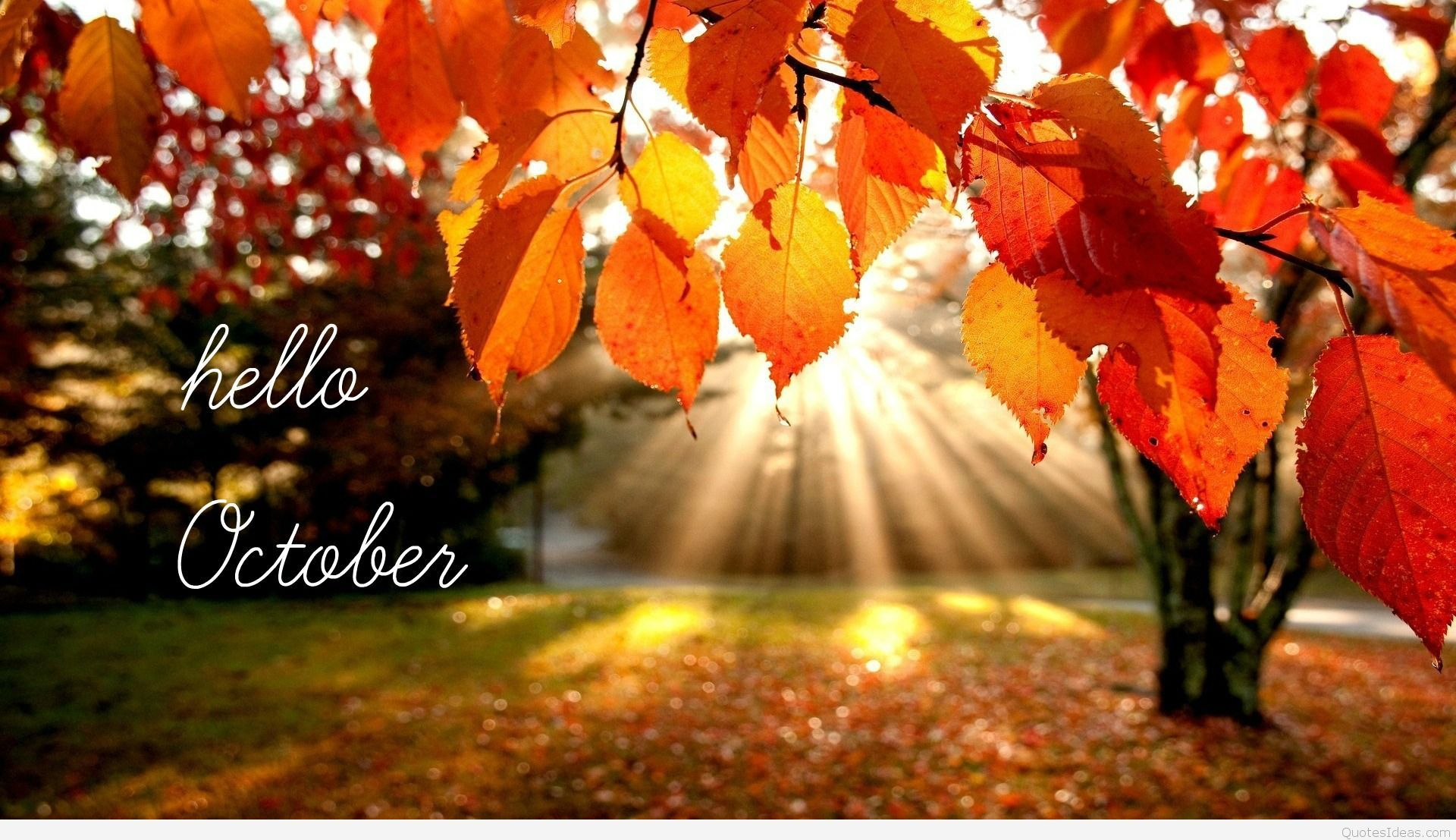 1920x1107 50 Hello October images and pictures