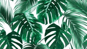 Palm Leaves Wallpapers – Top Free Palm Leaves Backgrounds