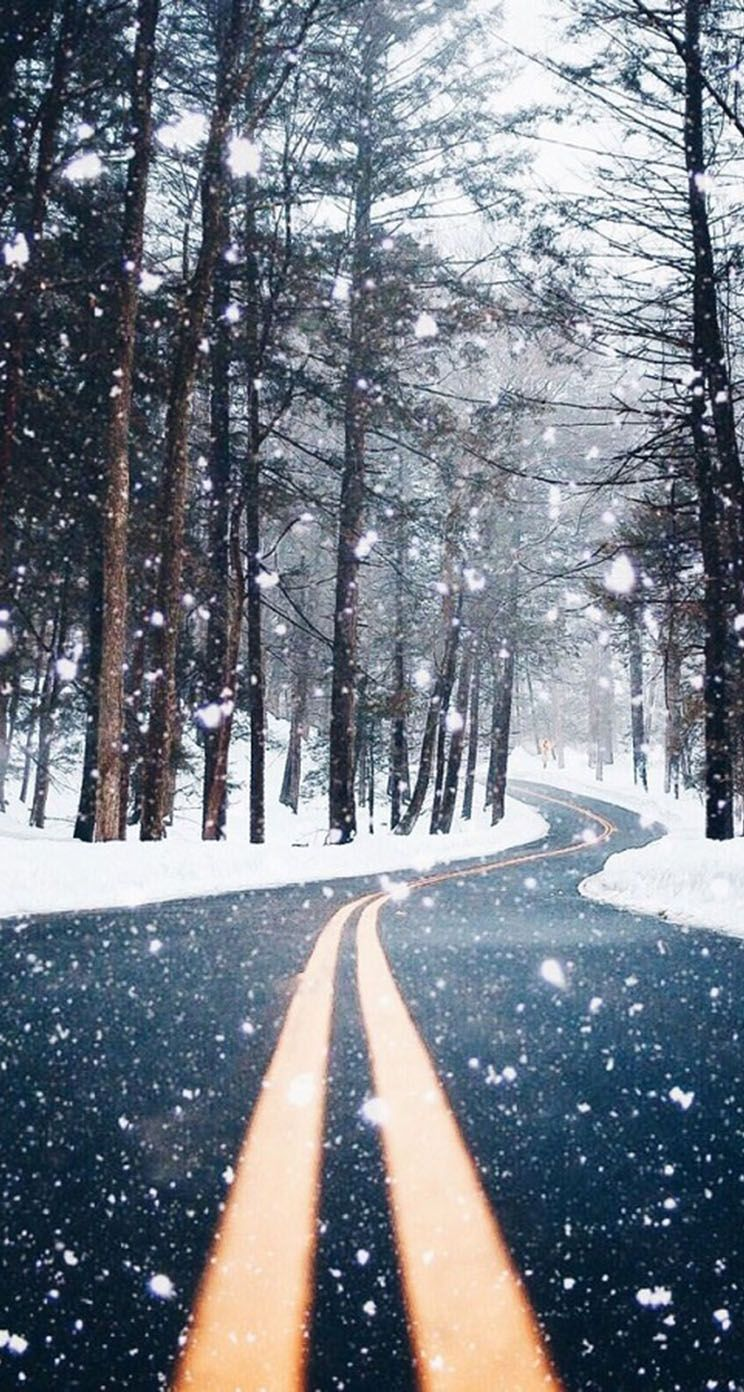 744x1392 The iPhone Wallpapers » Country Road Forest