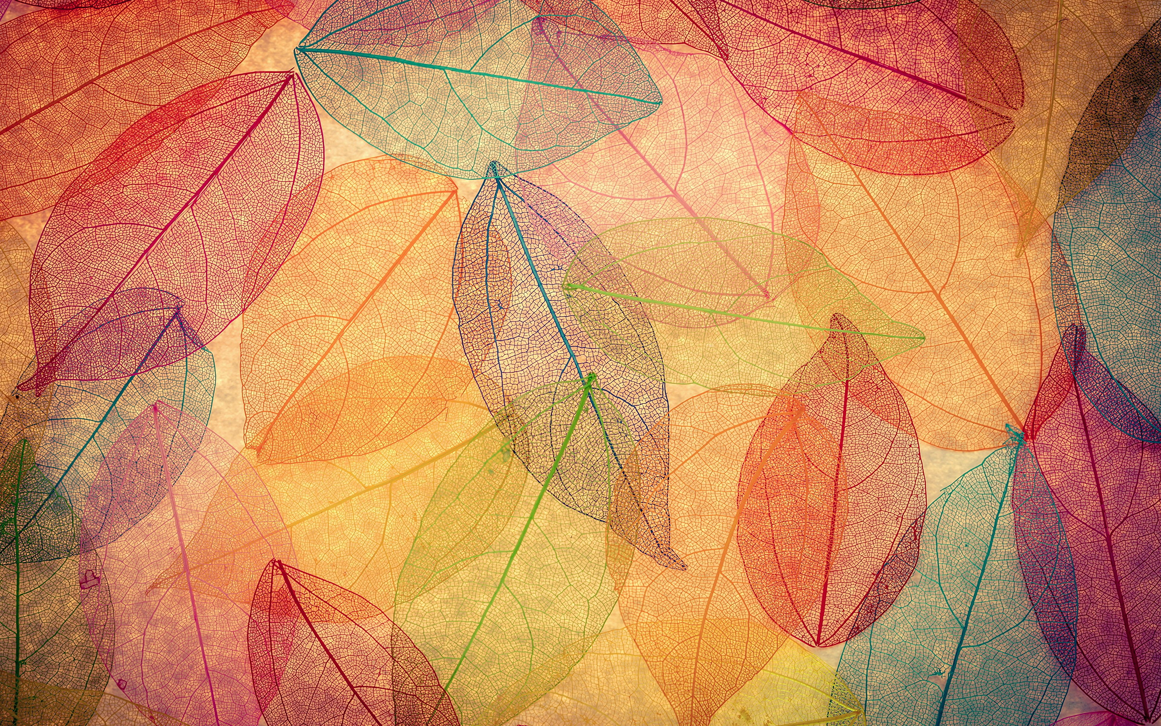 3840x2400 Wallpaper Foliage autumn leaves transparent abstract 3840x2400
