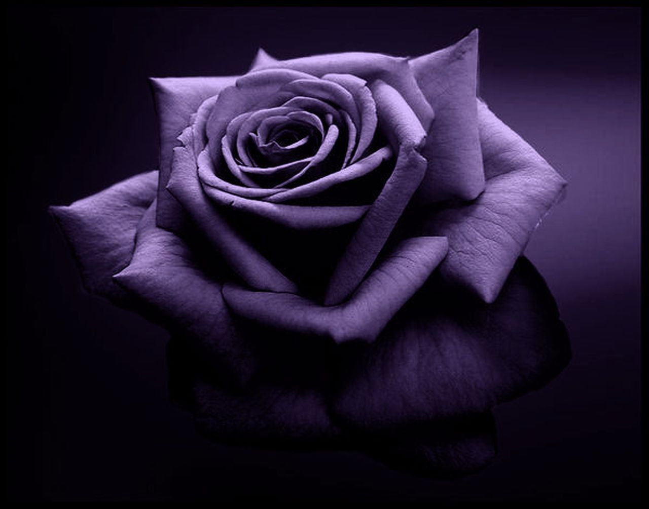 1280x1005 50+ Black and Purple Flowers Wallpapers - Download at ...