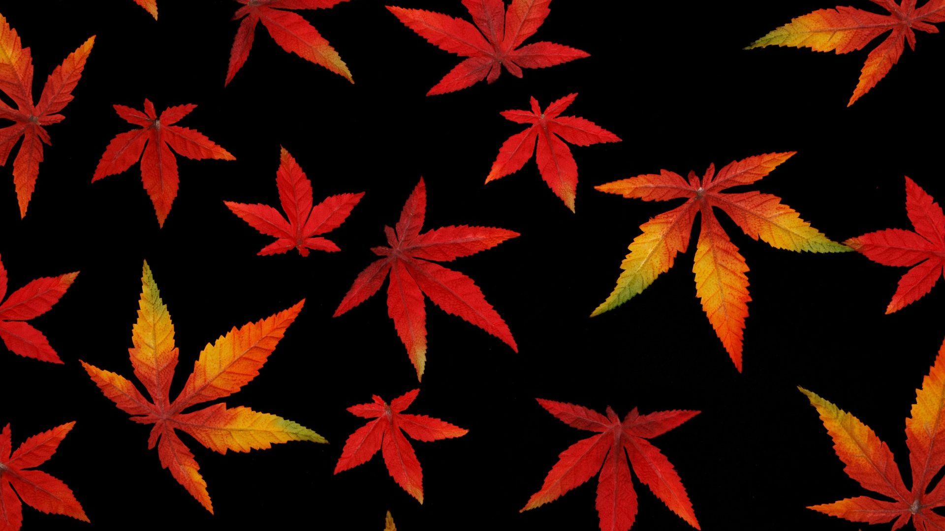 1920x1080 Abstract Autumn Leaf with Black Background Wallpaper ...