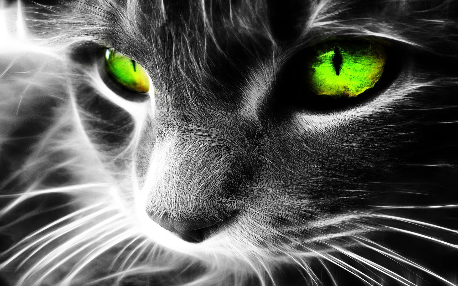 1920x1200 Neon Cat Wallpaper , (60+) image collections of wallpapers