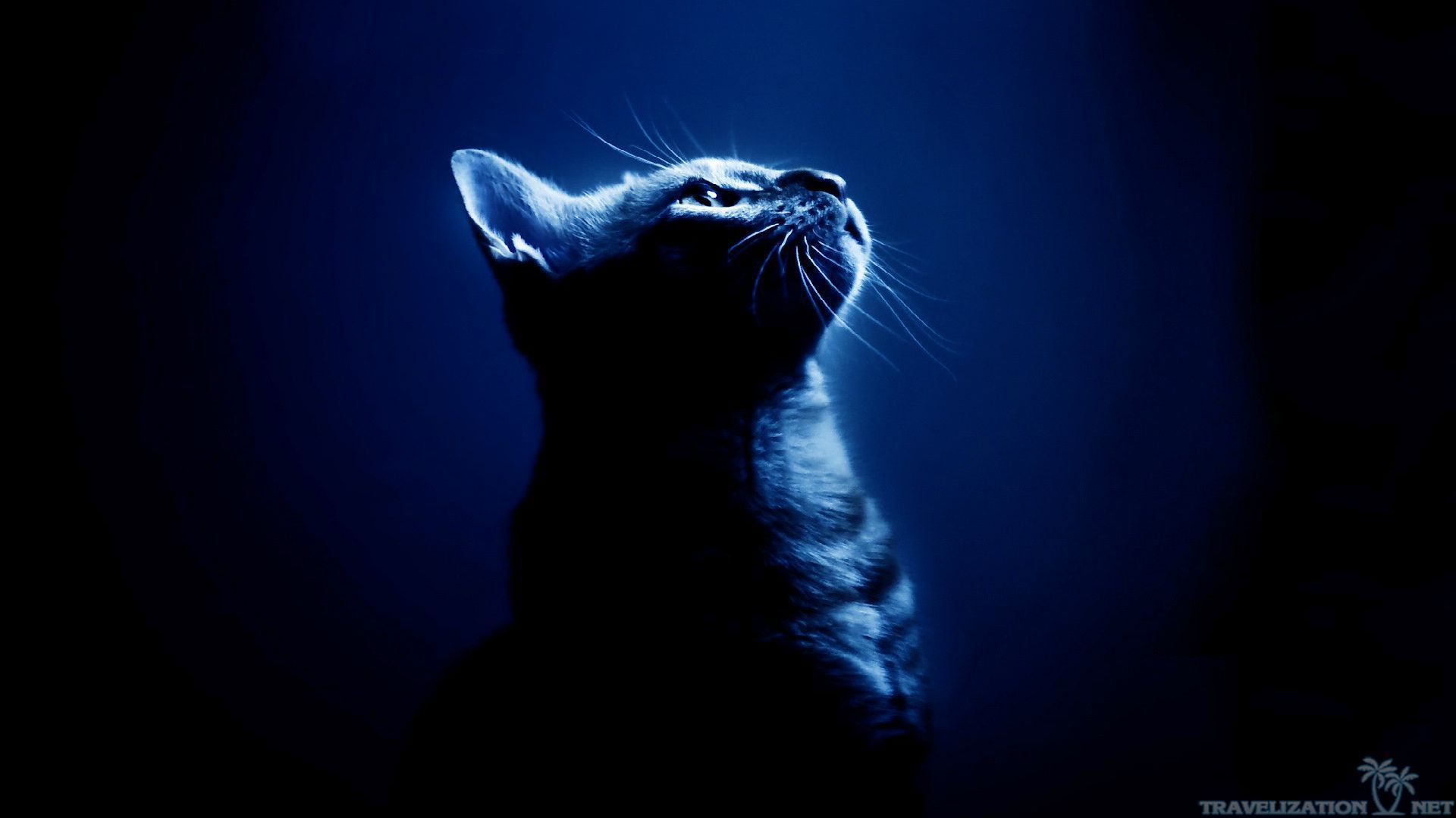 1920x1080 Cool Cat Backgrounds - Wallpapers Browse