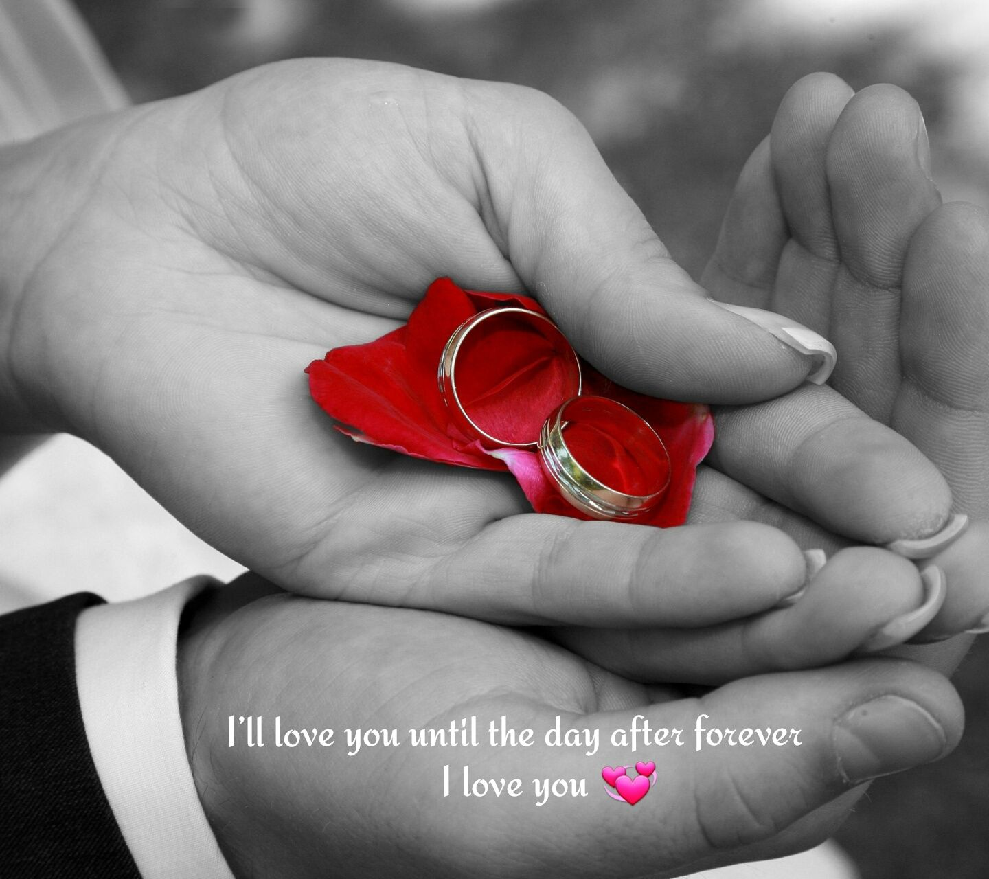 1440x1280 Download Untill the day love forever image - Desktop laptop ...