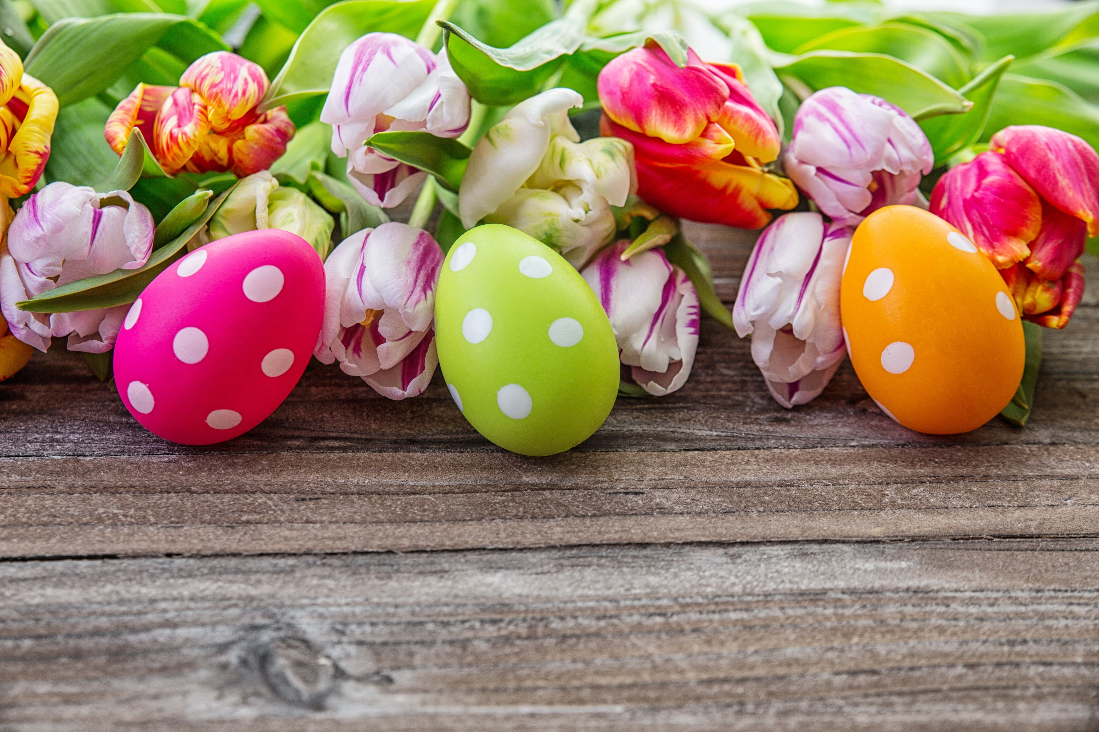 4200x2800 Picture Easter Eggs Tulips Flowers Holidays