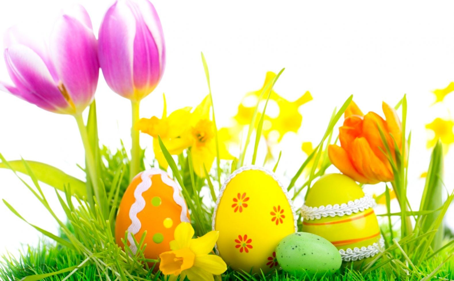1579x976 Wallpaper Hd Flower Egg Colors | Pack Wallpapers