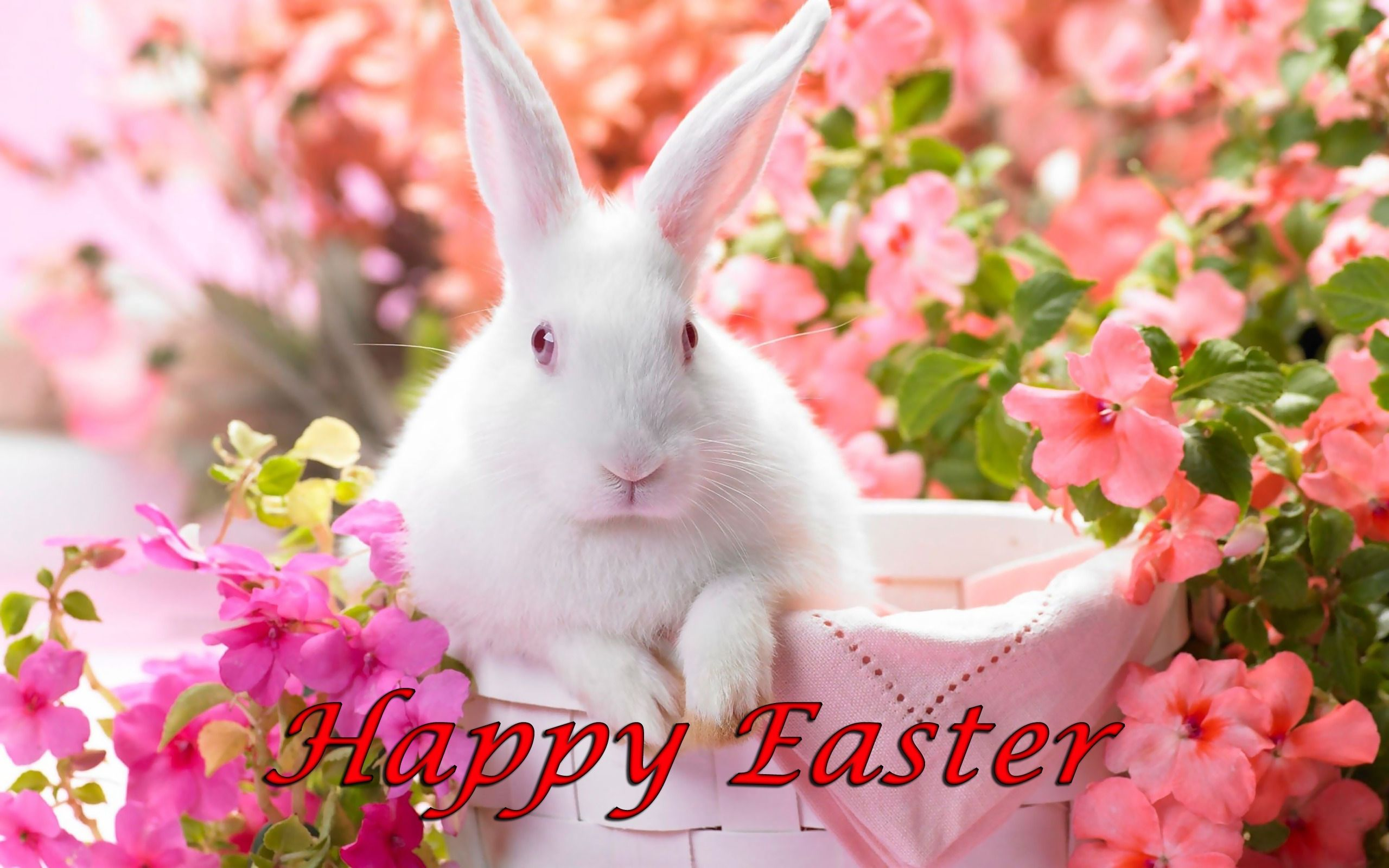 2560x1600 Happy Easter, White Bunny in Basket Surrounded by Flowers ...
