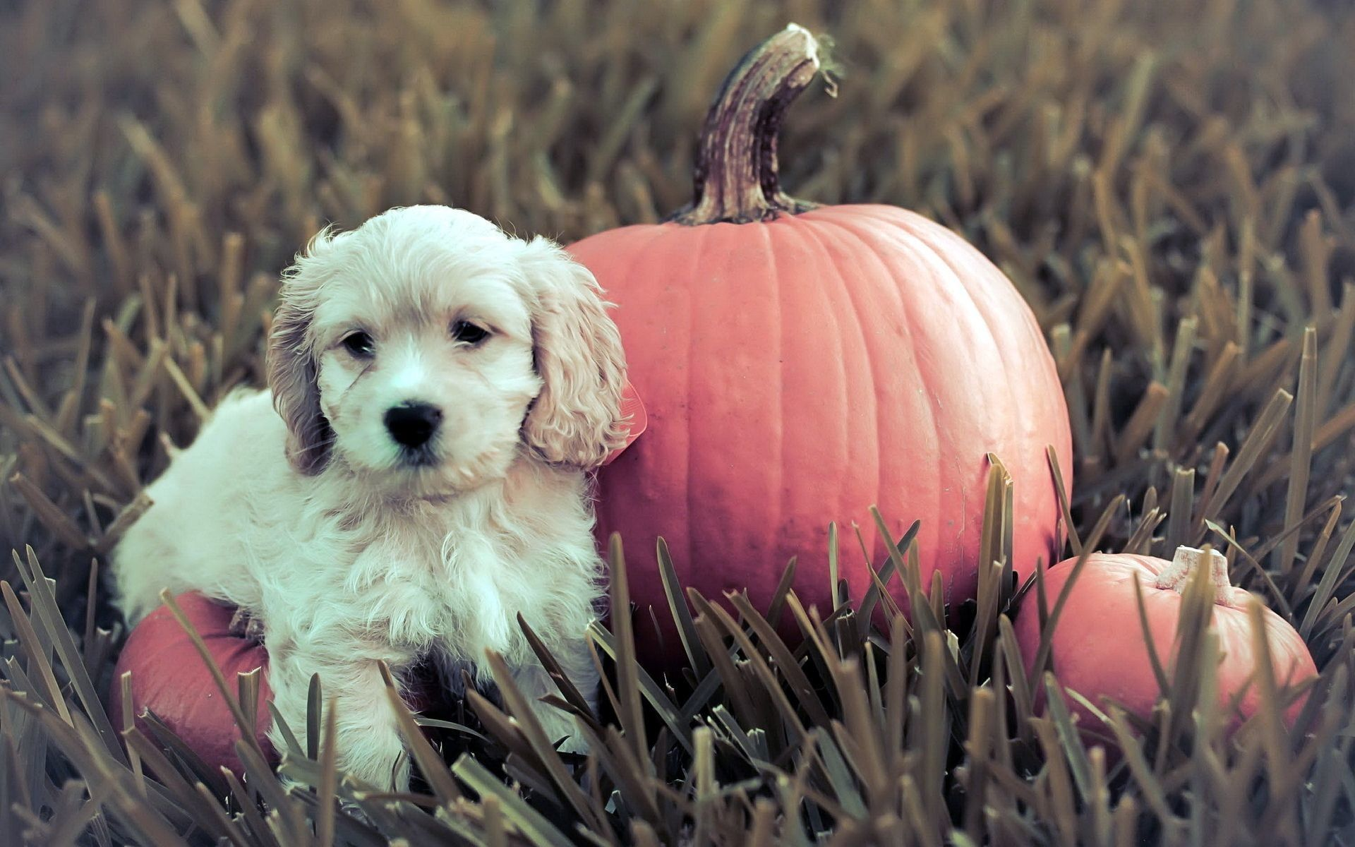 1920x1200 64+ Halloween Pets Wallpapers on WallpaperPlay