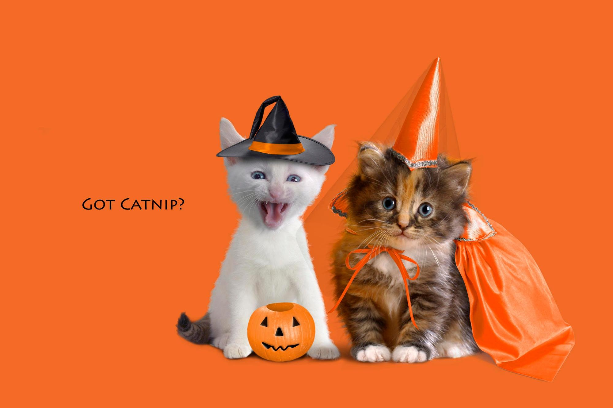 2000x1330 740 Halloween HD Wallpapers | Background Images - Wallpaper ...