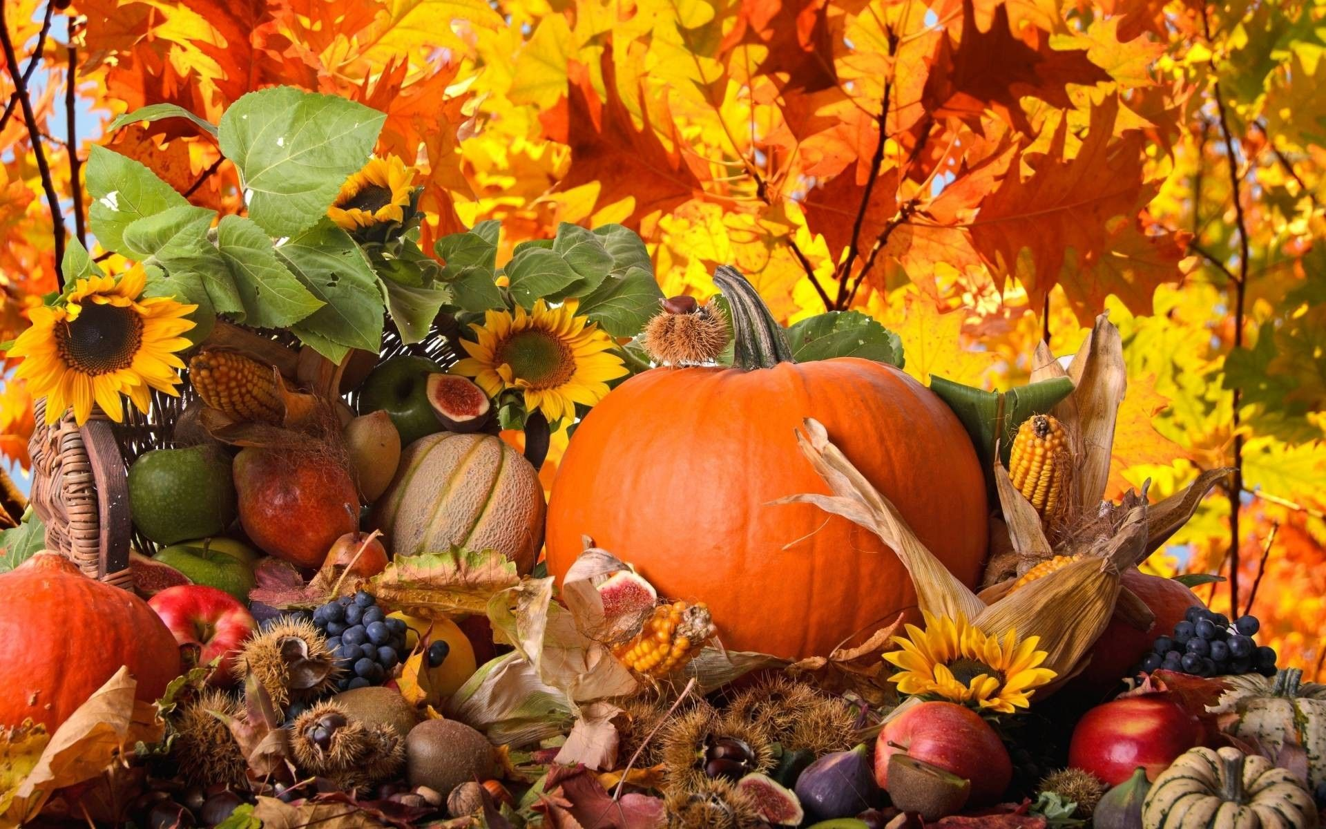 1920x1200 Cute Thanksgiving Wallpapers for Desktop (60+ images)