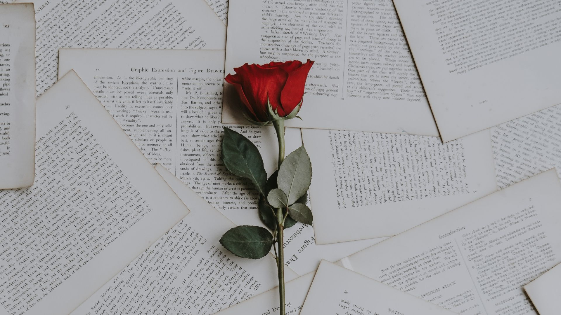 1920x1080 1920x1080 Wallpaper rose, books, texts | backgrounds in 2019 ...