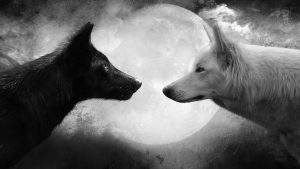 Black and White Wolf Wallpapers – Top Free Black and White Wolf Backgrounds