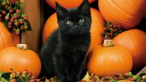 Cute Black Cat Halloween Wallpapers – Top Free Cute Black Cat Halloween Backgrounds