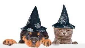 Dog Cat Halloween Wallpapers – Top Free Dog Cat Halloween Backgrounds