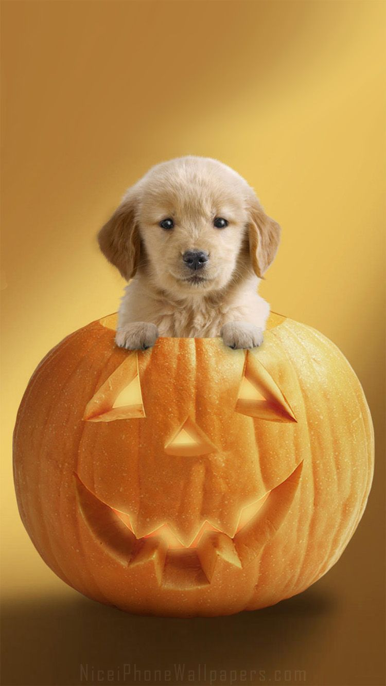 750x1334 45+ Cute Puppy Halloween Wallpapers - Download at WallpaperBro