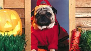 Funny Dog Halloween Wallpapers – Top Free Funny Dog Halloween Backgrounds