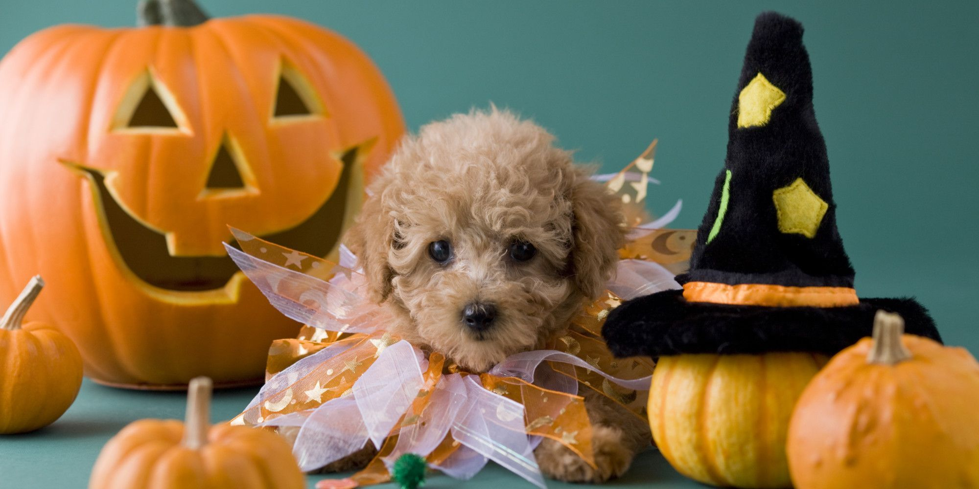 2000x1000 45+ Cute Puppy Halloween Wallpapers - Download at WallpaperBro