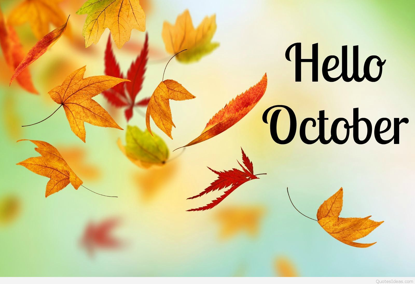 1600x1093 Hello October Hello Halloween sayings, pics and covers hd