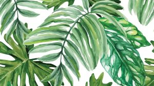 Watercolor Palm Leaves Wallpapers – Top Free Watercolor Palm Leaves Backgrounds