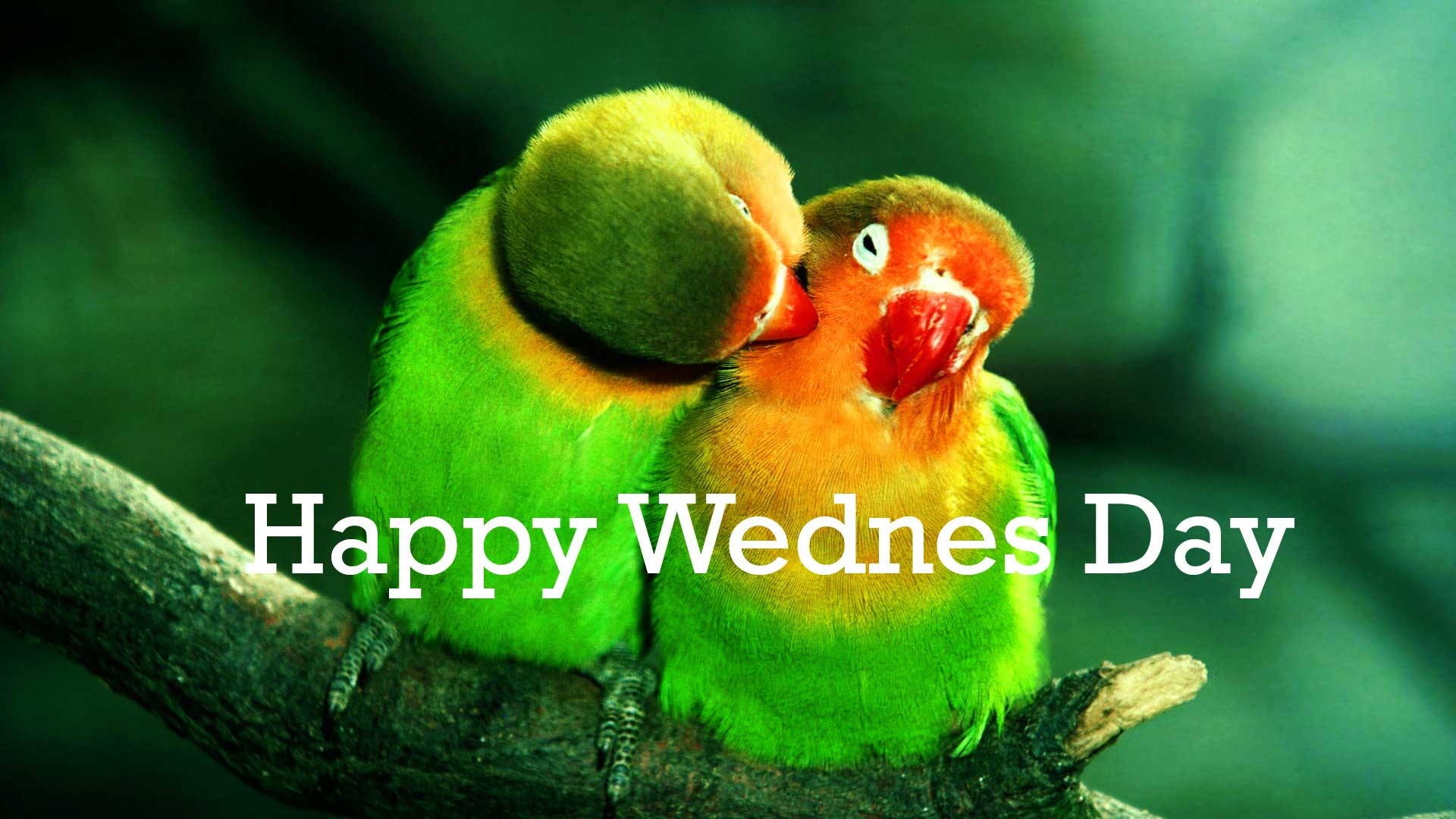 1920x1080 341+ Wednesday Good Morning Wishes Images Photo Pics ...