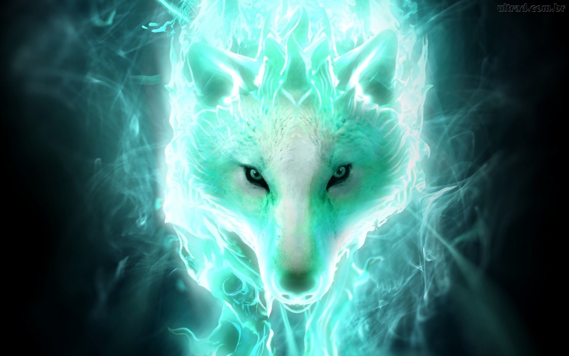 1920x1200 Fire wolf wallpaper - crazywidow.info