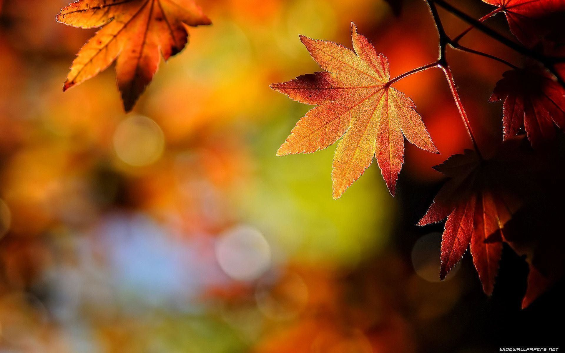 1920x1200 69+ Autumn Leaf Wallpapers on WallpaperPlay