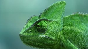 Bing Chameleon Wallpapers – Top Free Bing Chameleon Backgrounds
