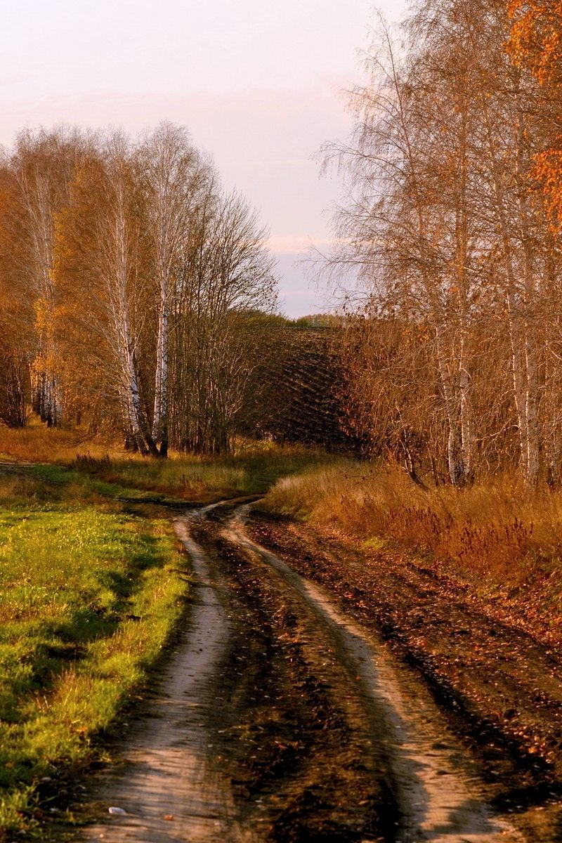 800x1200 Download wallpaper 800x1200 road, country, birches, autumn ...