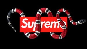 Supreme Gucci Snake Wallpapers – Top Free Supreme Gucci Snake Backgrounds