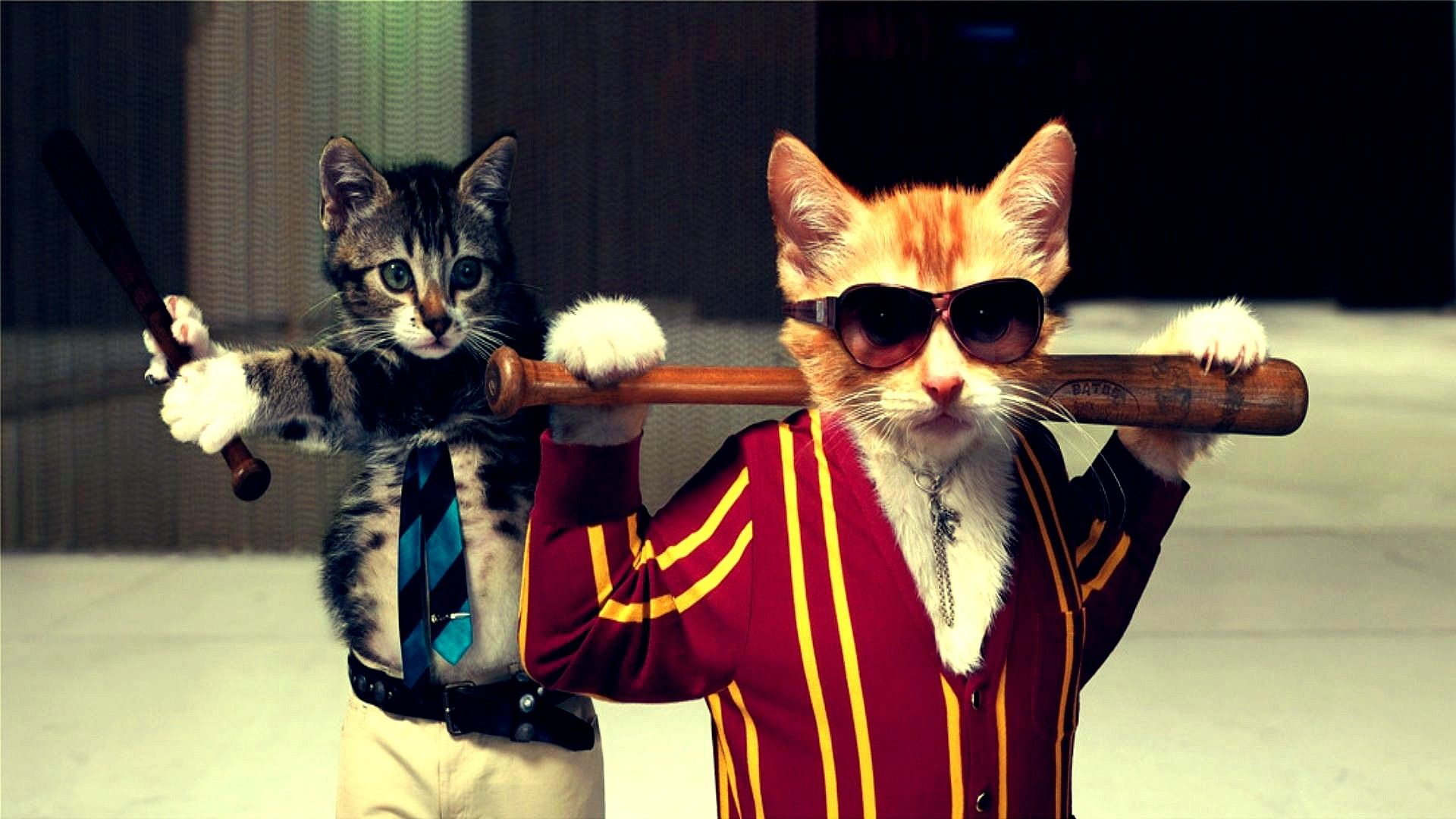 1920x1080 Thug Cats. | Geek | Funny cat wallpaper, Funny animals ...