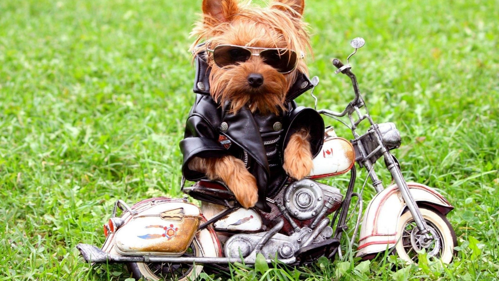 1920x1080 Funny-Dog-On-The-Motorcycle-Wallpaper-HD-free-for-desktop ...