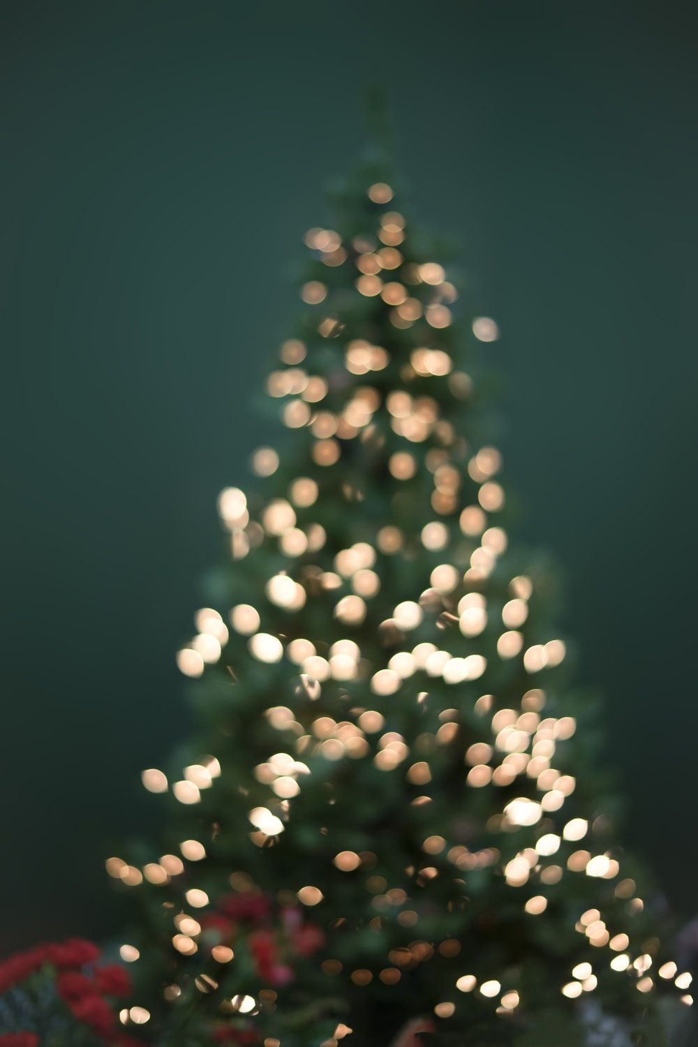 1000x1500 900+ Christmas Tree Images: Download HD Pictures & Photos on ...