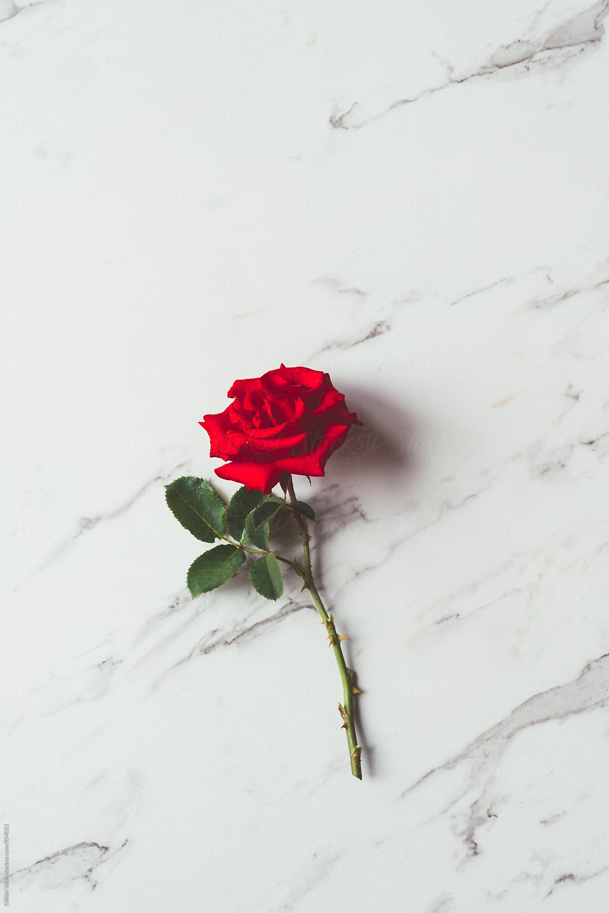 1200x1799 red rose on a marble background by Gillian Vann - Rose ...