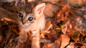 Fall Cat Wallpapers – Top Free Fall Cat Backgrounds