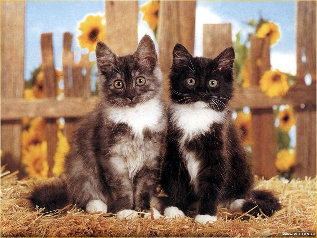 1024x768 Pin by Betty Wobler Mesing on animals | Kittens, Cats, Animals