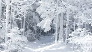 White Forest Wallpapers – Top Free White Forest Backgrounds