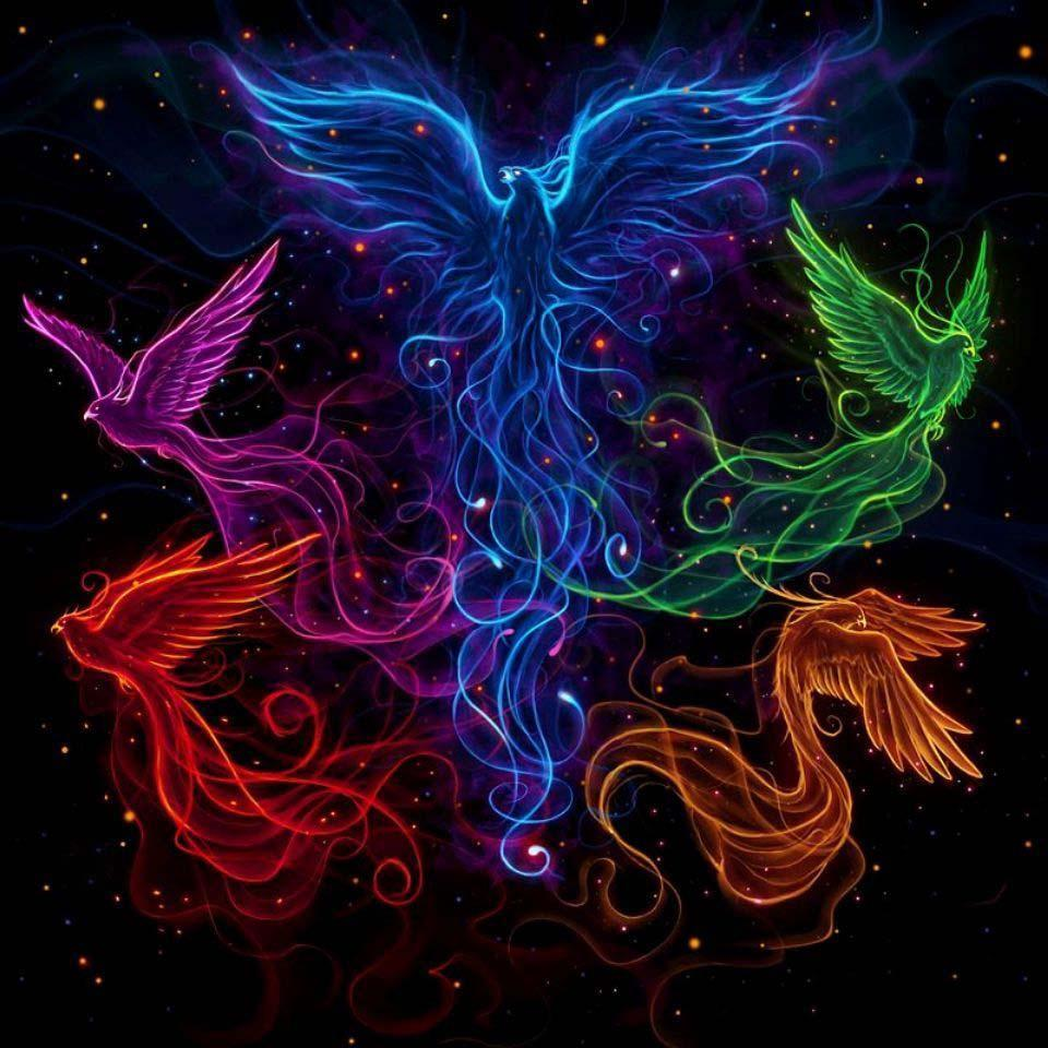 960x960 Phoenix HD Wallpaper for Android - APK Download