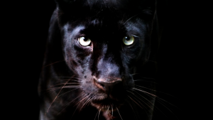 Black Panther Animal iPhone Wallpapers – Top Free Black Panther Animal iPhone Backgrounds