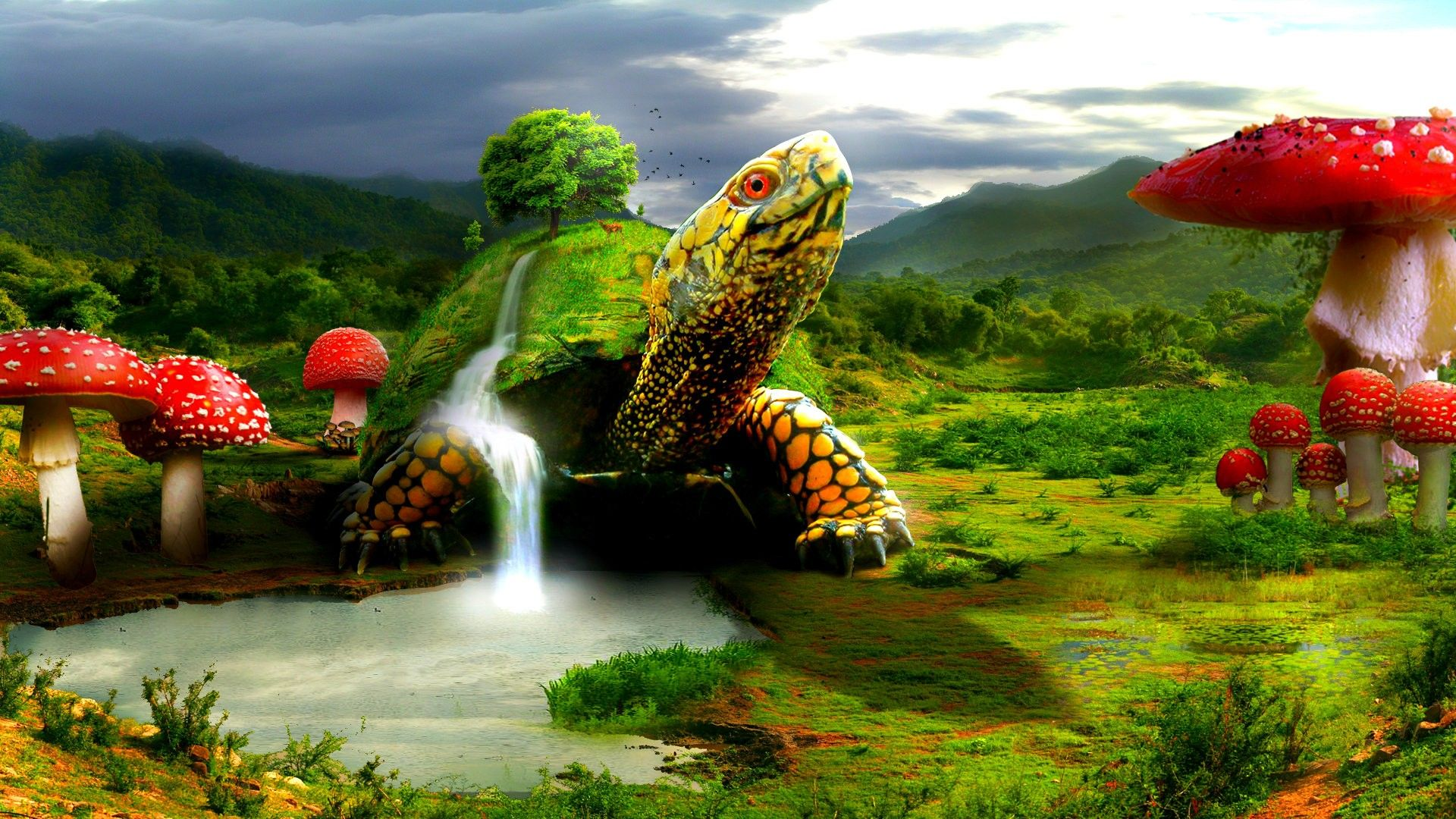 1920x1080 Abstract Turtle HD Wallpaper HD Wallpapers Desktop Images ...