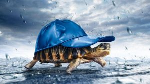 Abstract Turtle Wallpapers – Top Free Abstract Turtle Backgrounds