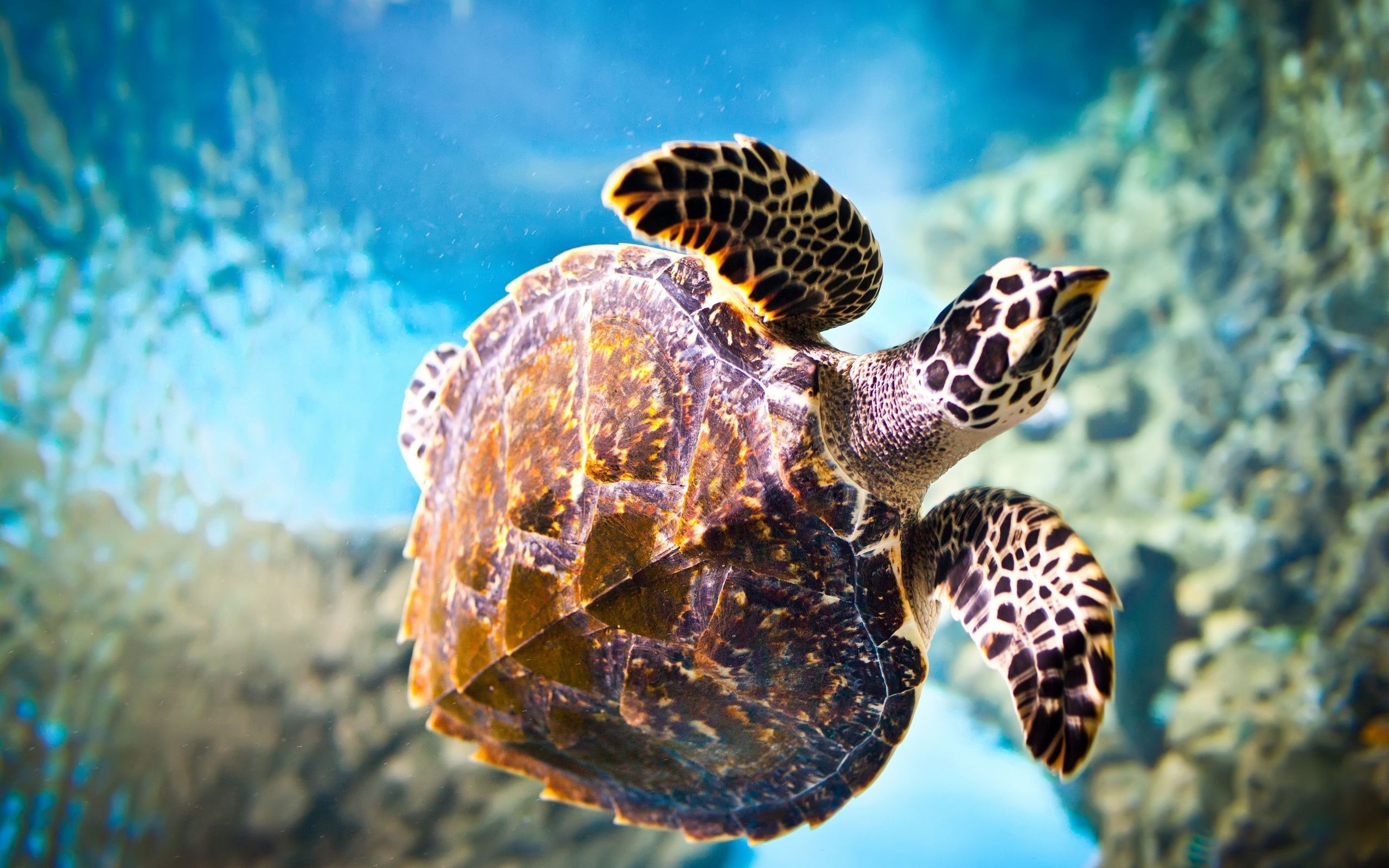 2560x1600 65+ HD Turtle Wallpapers - Download at WallpaperBro